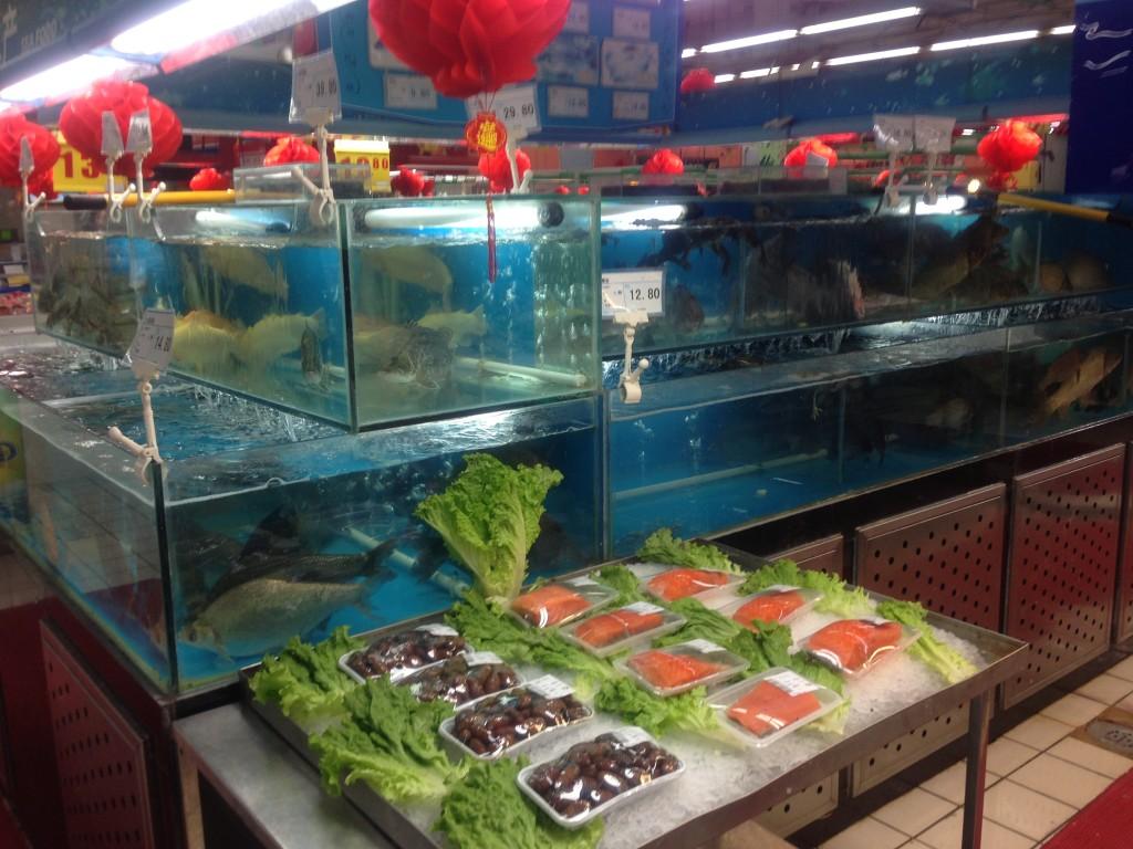 Fish tanks at The Wu